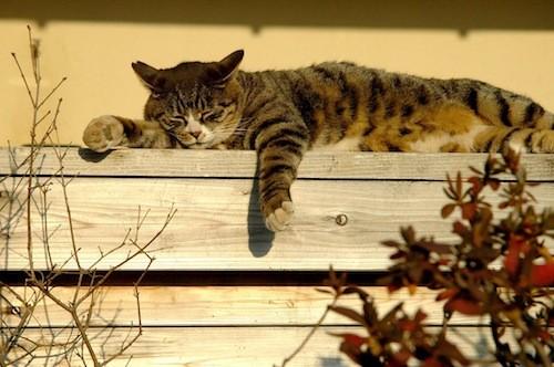 モデルは、このネコだけれど