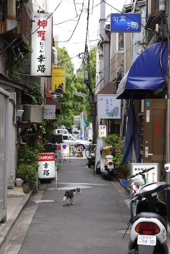 下町にネコはいますがイヌは似合わない、のか?