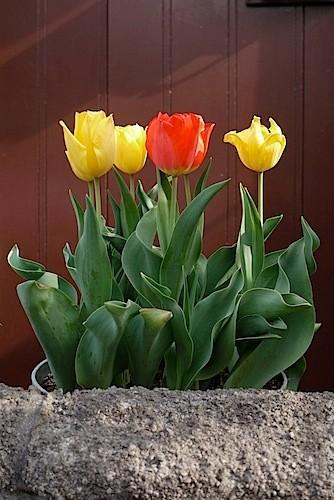 姿勢の良い花たち