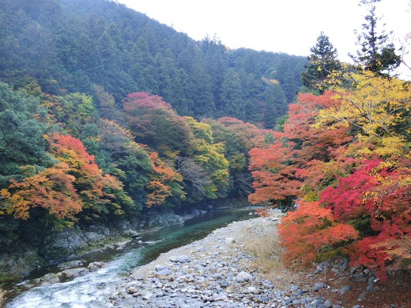 約30年前、四季の自然が豊かな東吉野に家族で移住しました。