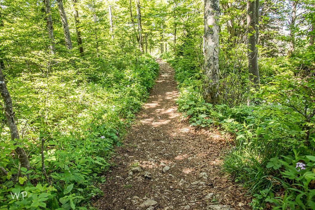 Nein, hier sieht der Weg noch richtig nett aus -  Was dann kam, war echt krass; steinig, treppenmässig und steil steil... Unsere Grossen mutierten zu Muli!!!