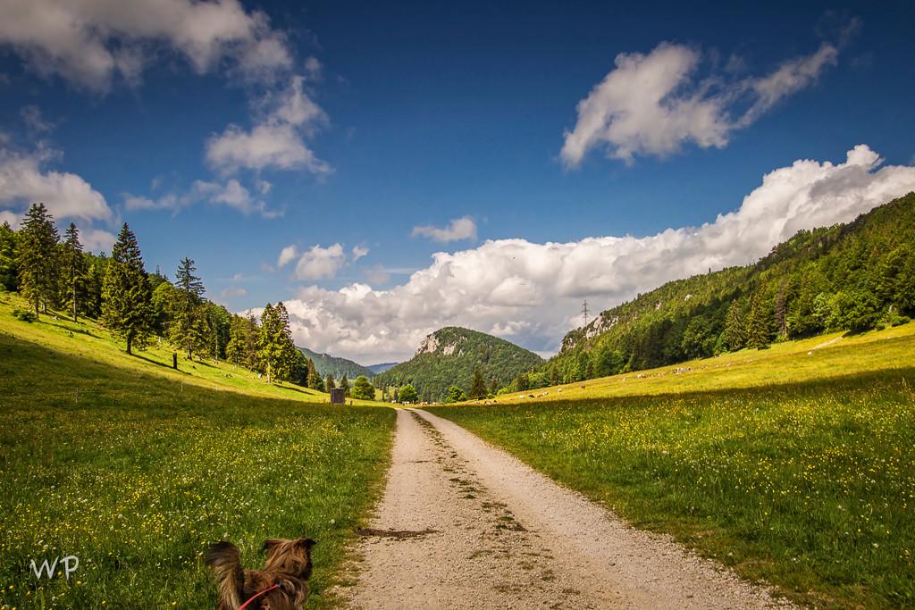 ... schöner Weg
