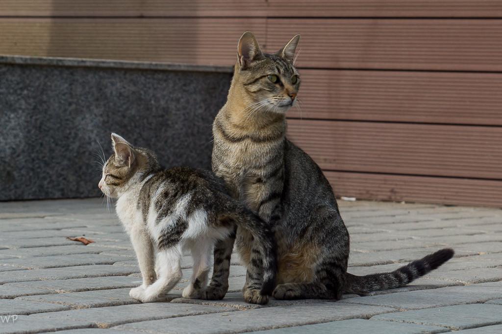 Und natürlich Katzen...