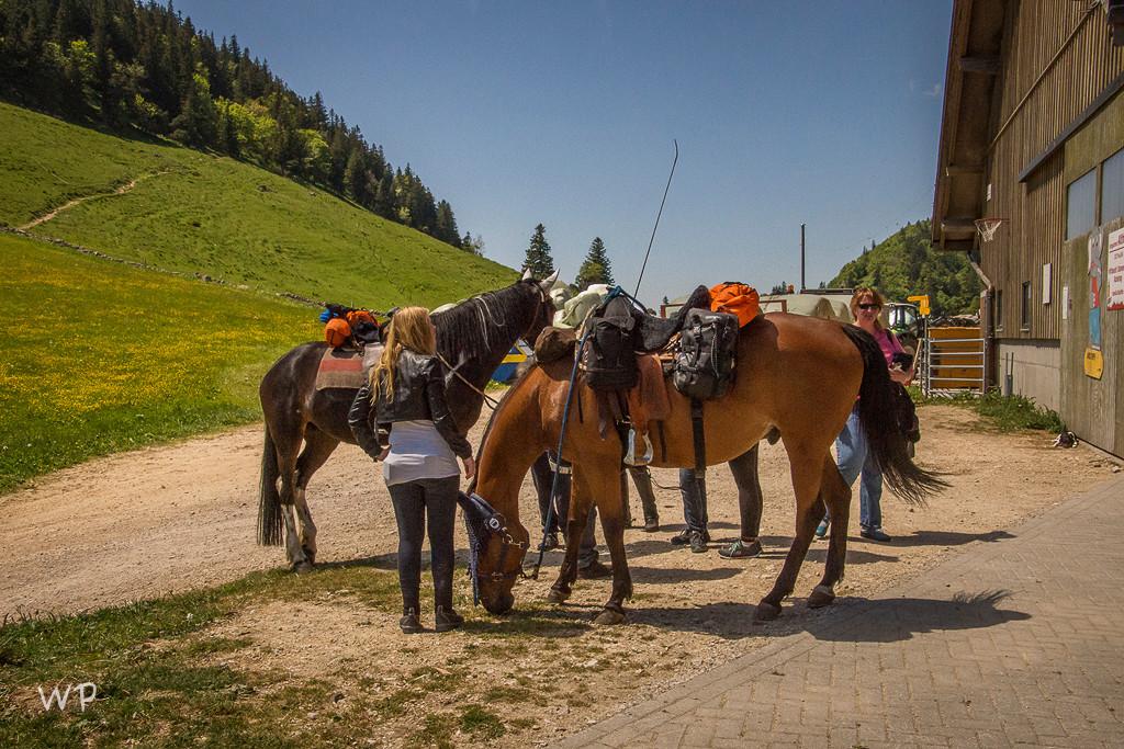 Unsere Pferde wurden begeistert bewundert und gekuschelt