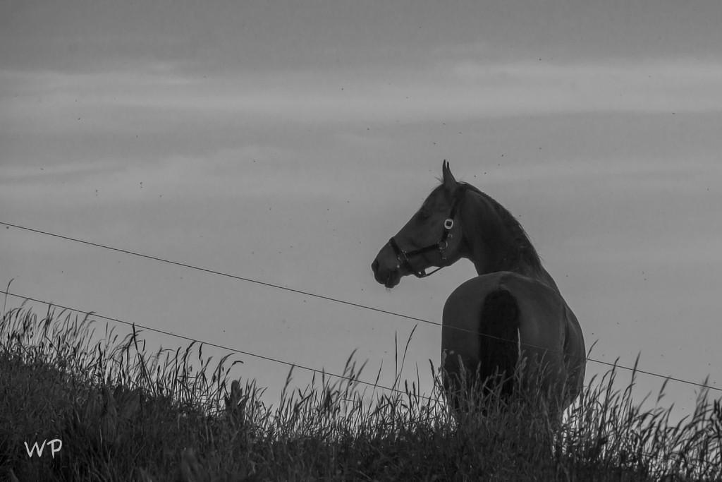 """... wunderbar """"gezeichnetes"""" Pferd"""