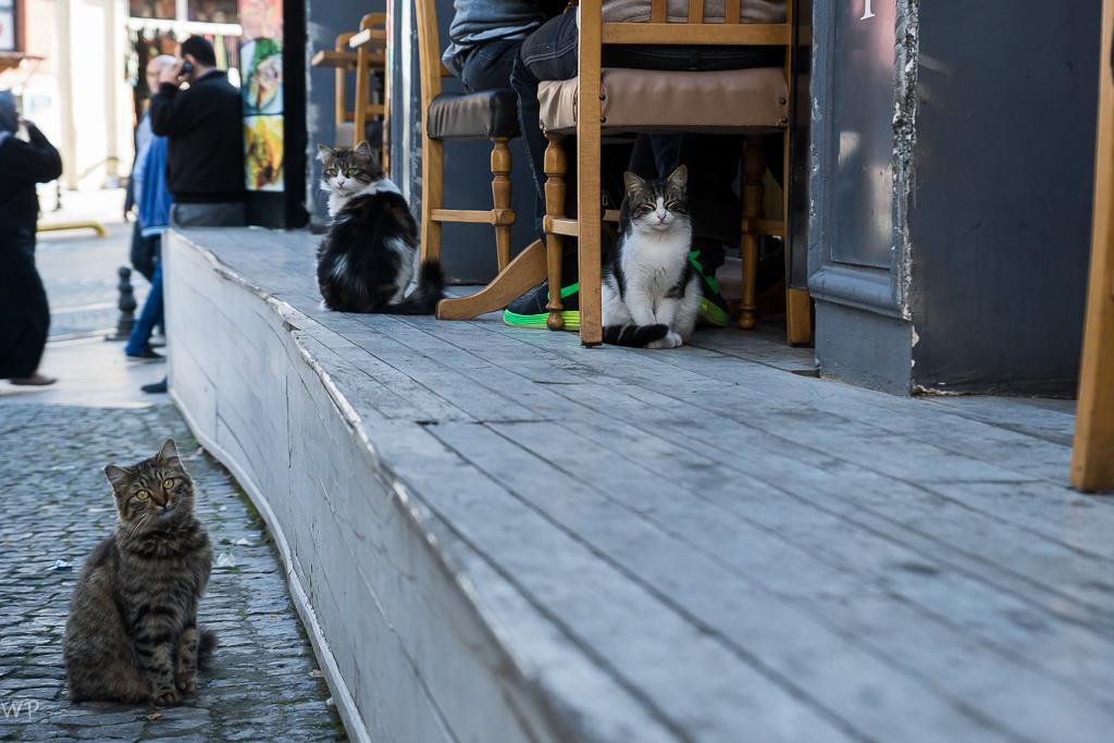 und eine Stadt der Katzen