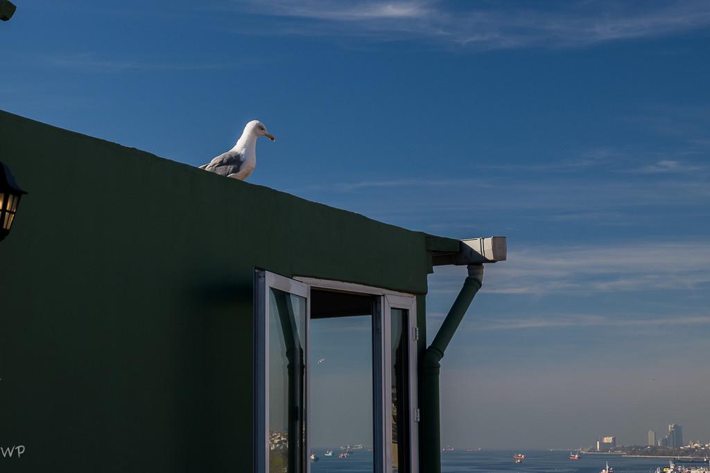 Riesig, diese Möwen (Mittelmeermöwen)