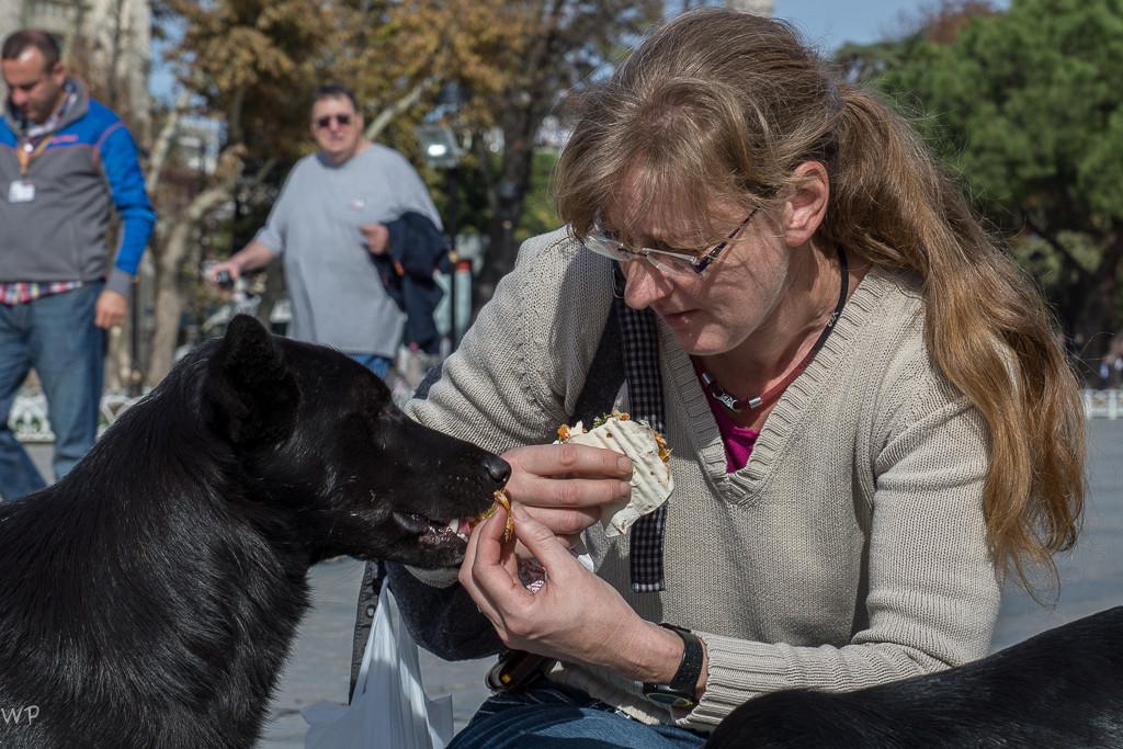 diese wunderbaren Hunde der Stadt, die geduldet von den Einwohner auf der Strasse leben