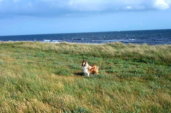 det macht so een Spaß, üba de Wiesen rennen und sich den Wind um de Neese wehen lassen ......