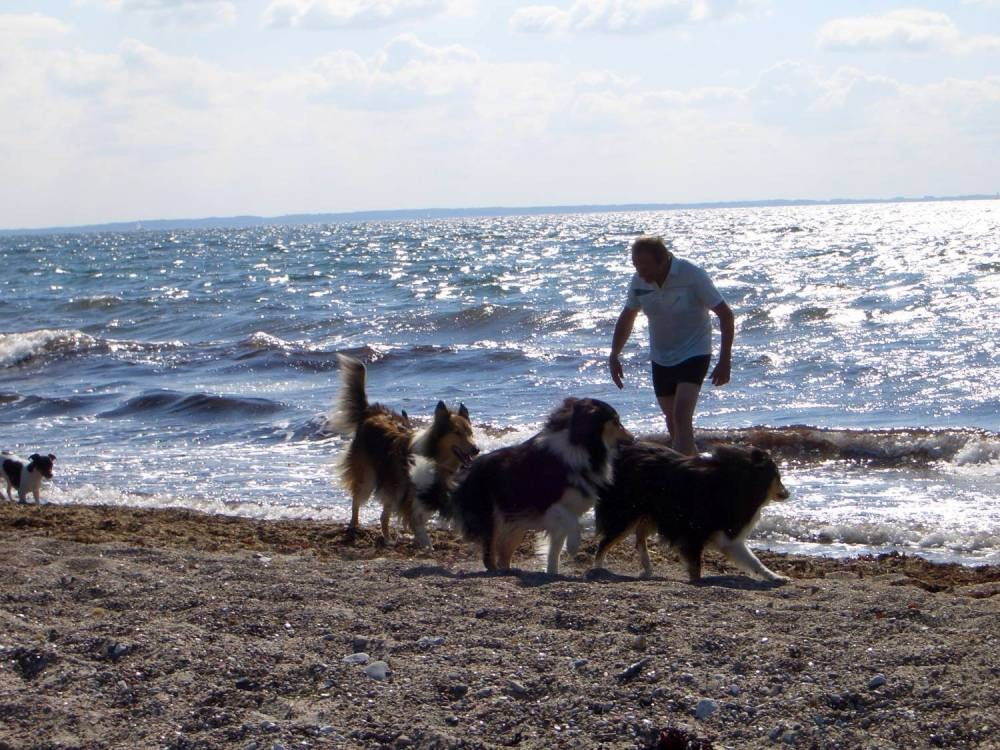 19.07.07 - Agilityfreier Tag am Meer
