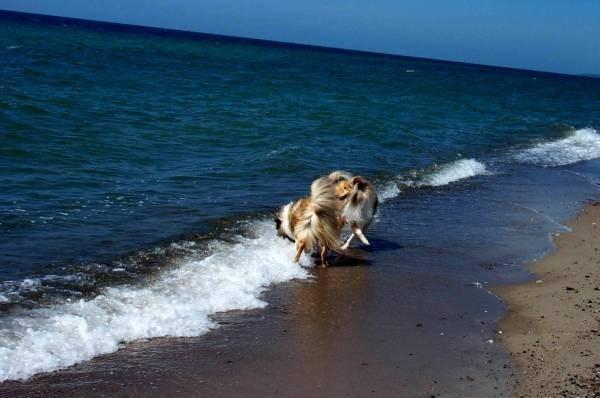 im Wasser herumtoben, det macht Laune ......