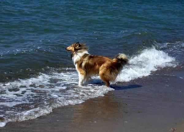 .... oder einfach nur uffs Meer kieken und träumen ....