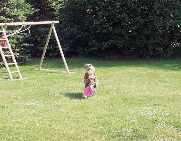 Hier spielt Frauchen mit mir Frisbee, det macht ooch een riiiiesen Spaß.