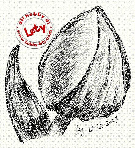 tulipano - dicembre 2009 (tavoletta grafica)