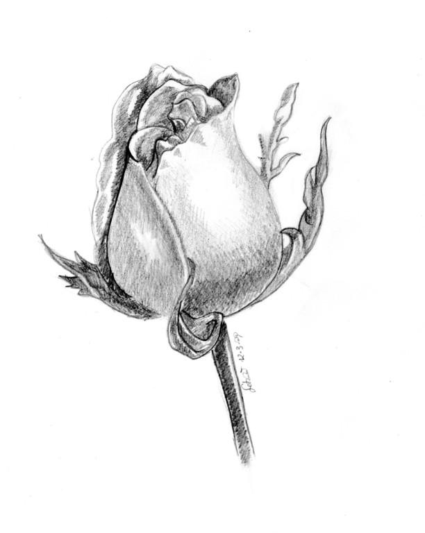 rosa - marzo 2009