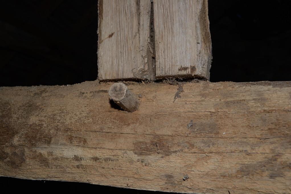 Attaque de vrillettes sur du chêne