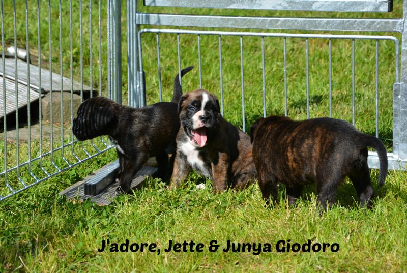 J'adore, Jette & Junya Giodoro - 30.05.2014