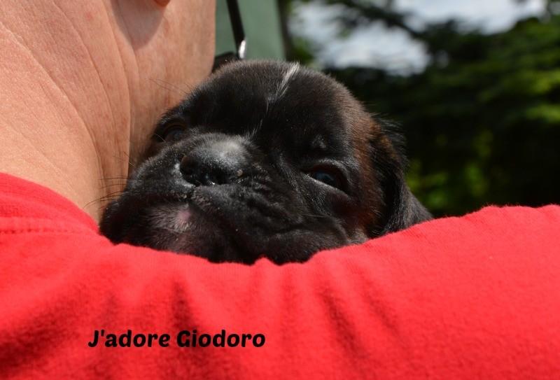 J'adore Giodoro - 05.06.2014