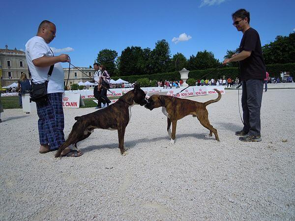 Atibox 2011 - Vater und Sohn - Uram Signum Laudis & Fendi Giodoro