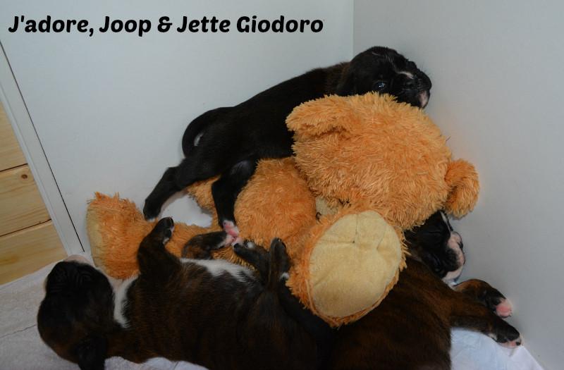 J'adore, Joop & Jette Giodoro - 21.05.2014