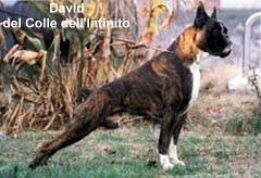 David del Colle dell'Infinito