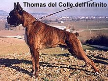 Thomas del Colle dell'Infinito