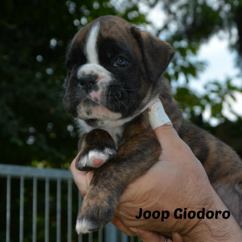 Joop Giodoro - 03.06.2014