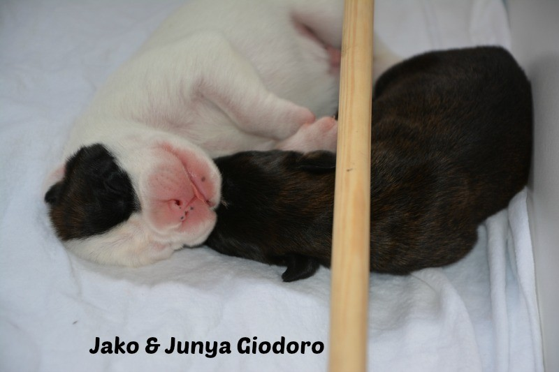 Jako Giodoro & Junya Giodoro - 6 days old