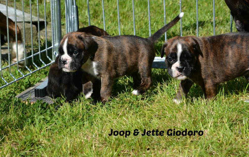 Jette & Joop Giodoro - 30.05.2014