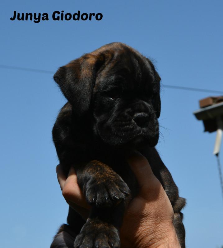 Junya Giodoro - 09.06.2014