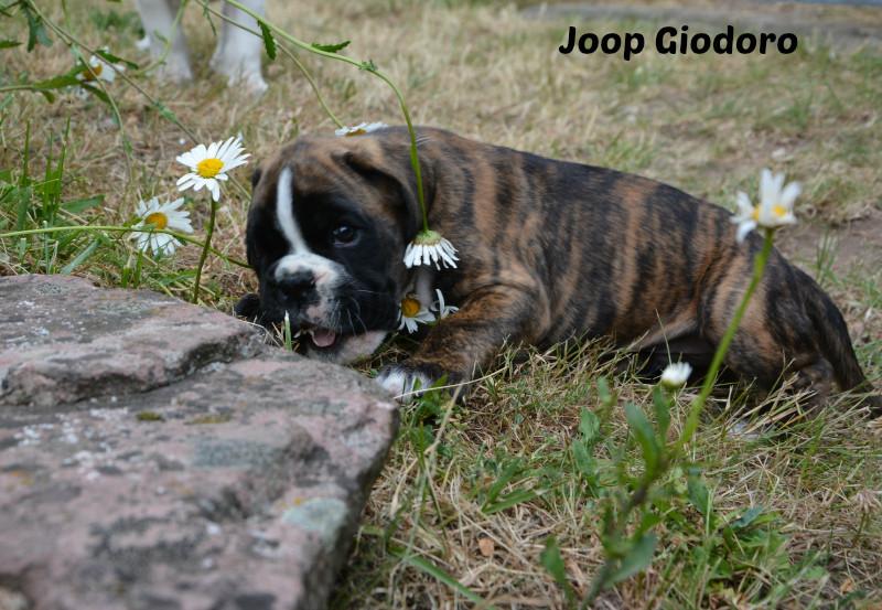 Joop Giodoro - 15.06.2014