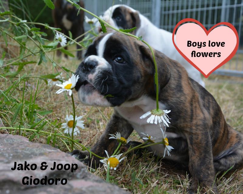 Joop & Jako Giodoro - 15.06.2014