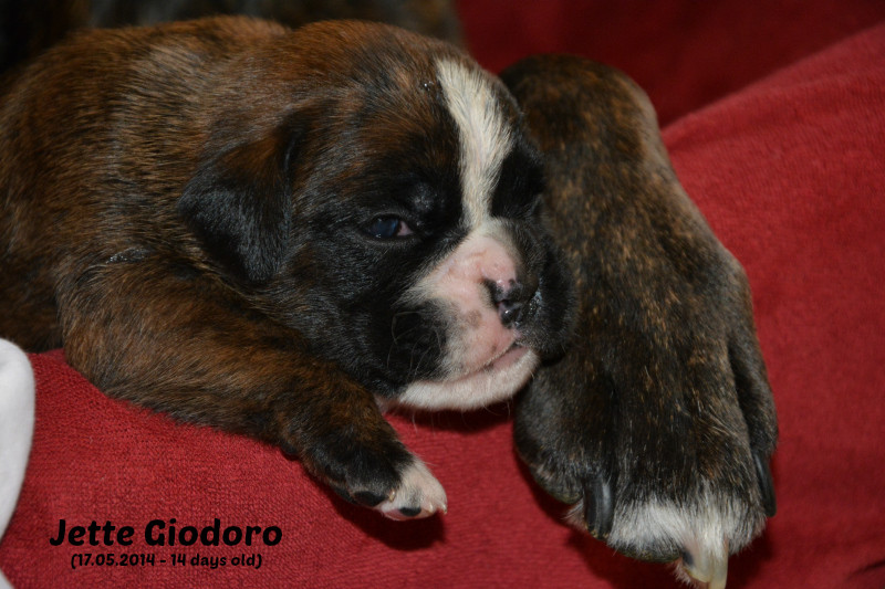 Jette Giodoro 14 days old - not available