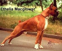 Ethelia Macglower