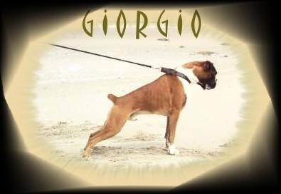 GIORGIO 15.08.1998 - 21.12.2008
