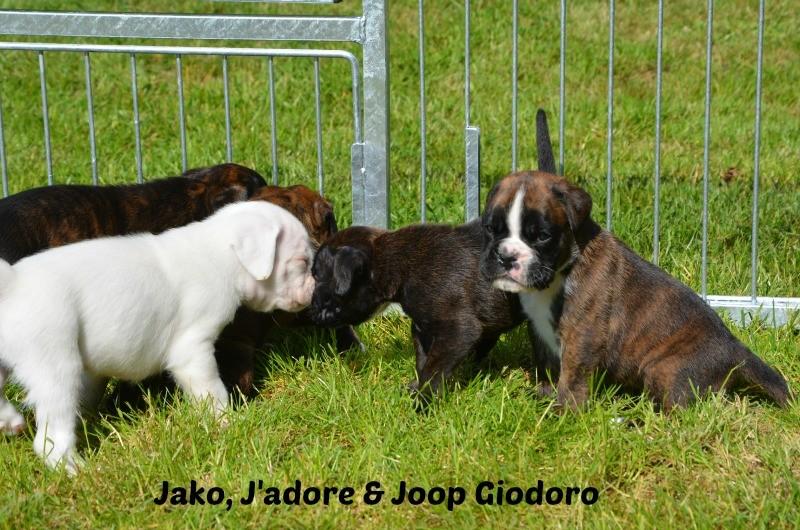 Jako, J'adore & Joop Giodoro - 30.05.2014