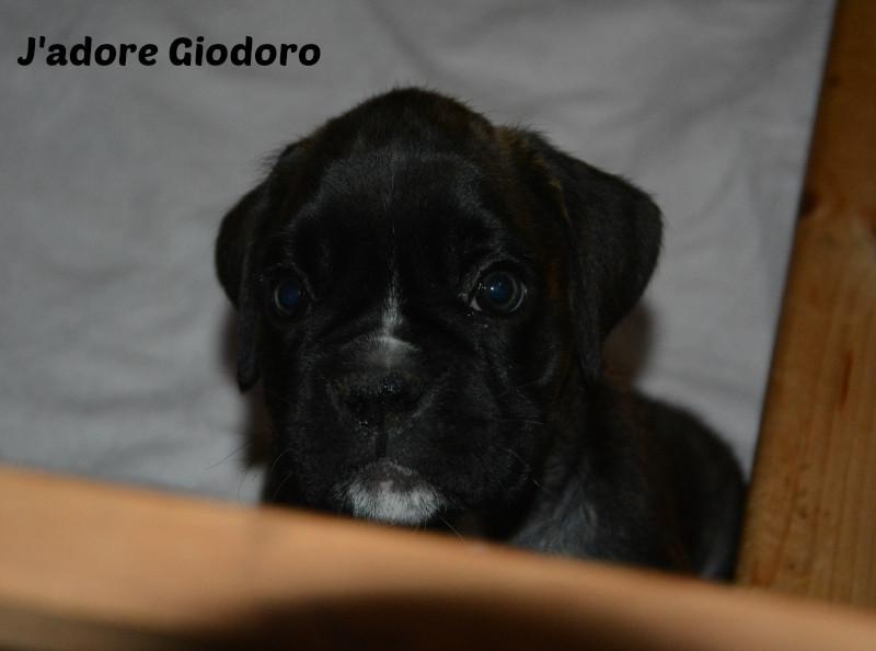 J'adore Giodoro - 13.06.2014