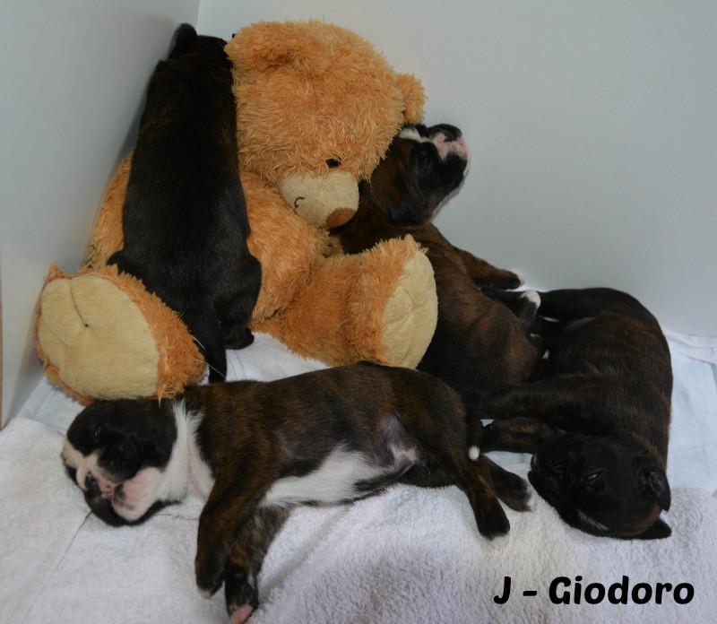 J'adore, Joop, Jette & Junya Giodoro - 21.05.2014