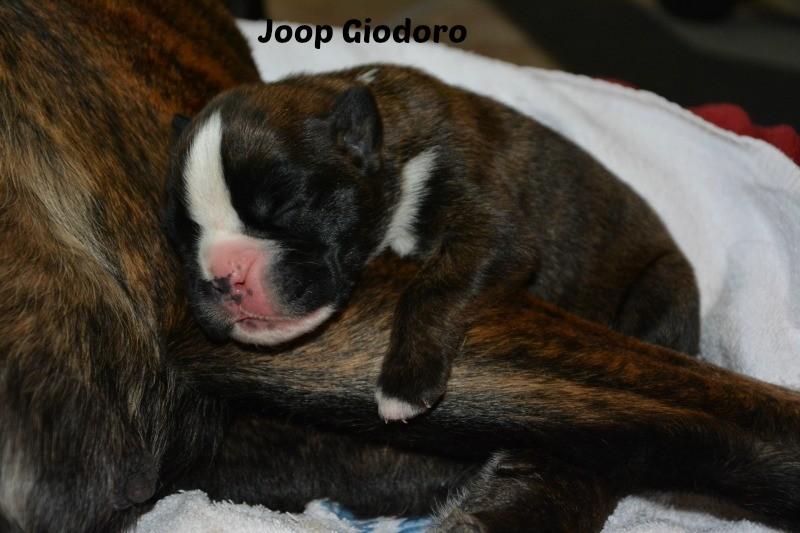 Joop Giodoro - 6 days old