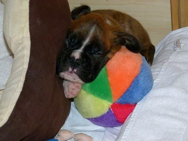 4 weeks old - 4 Wochen alt
