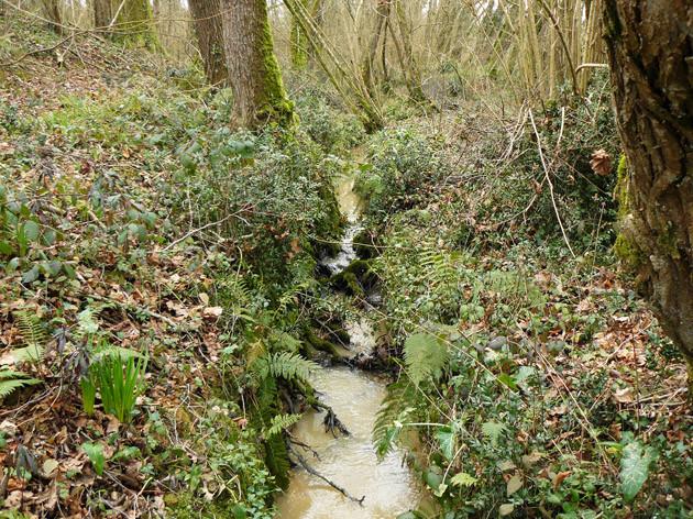 Le Ruisseau du Campot - ©M. H. CINGAL 2010