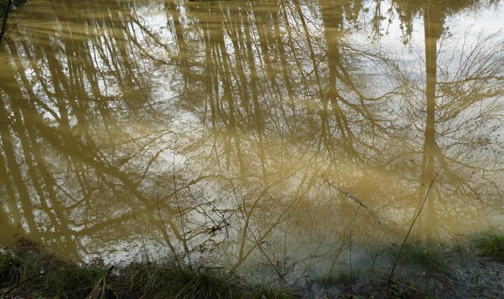 Reflets dans la grande mare - ©M. H. CINGAL 2010