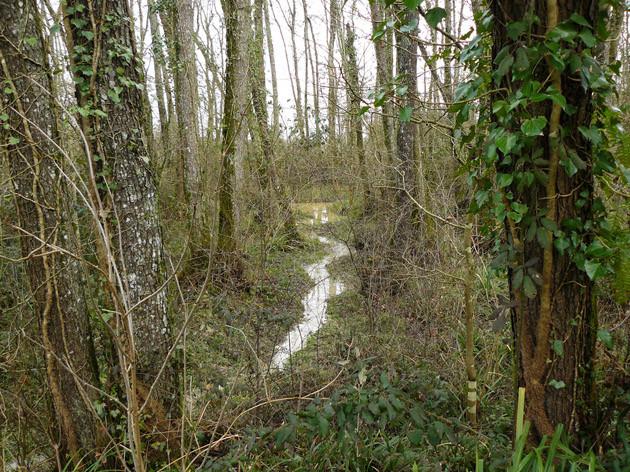 Le ruisseau de trop plein qui relie des deux mares - ©M. H. CINGAL 2010