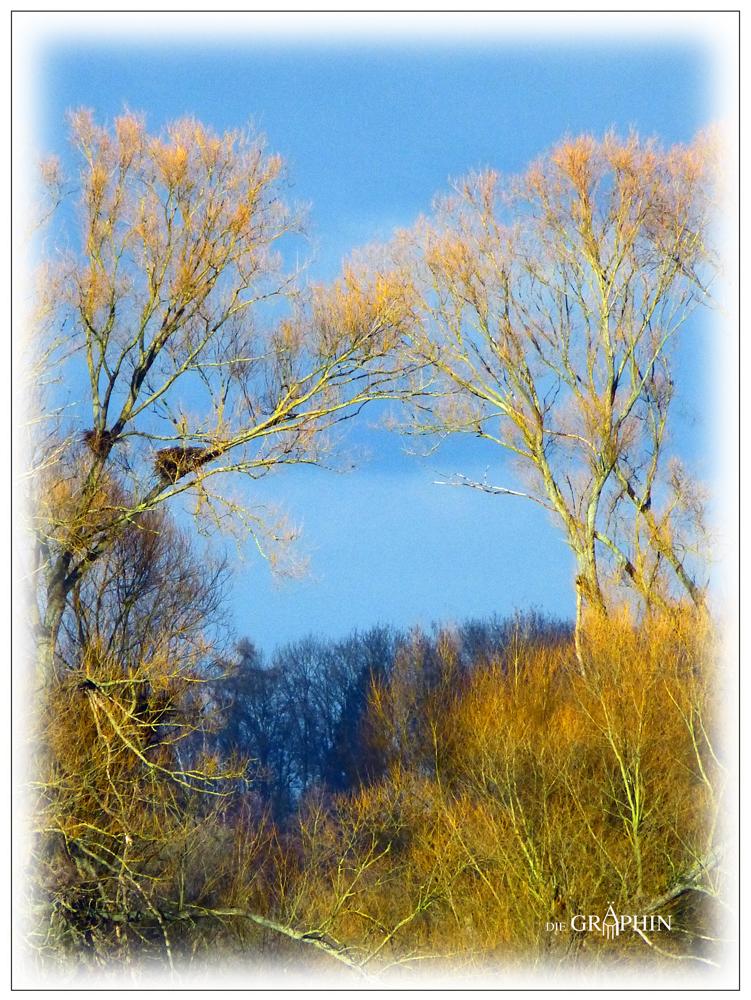 Storchen- und Reihernest - Reinheimer Teich © Jennie Bödeker
