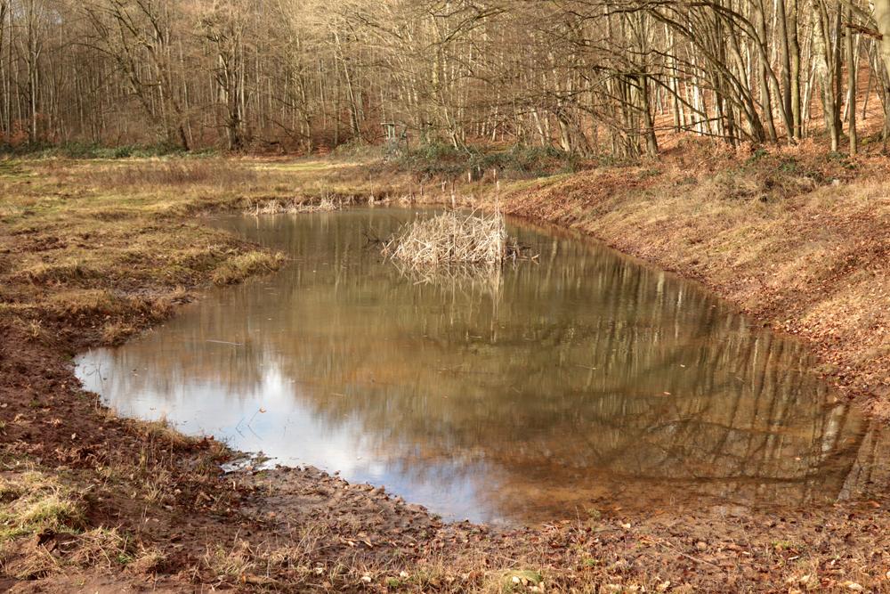 Das Ersatzgewässer ist dank einiger Wochen mit Regen gut gefüllt