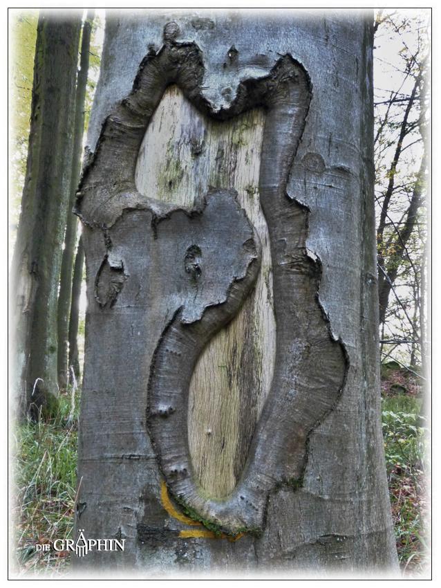 Baum heilt Wunde - Niedernhausen / Odw. © Jennie Bödeker