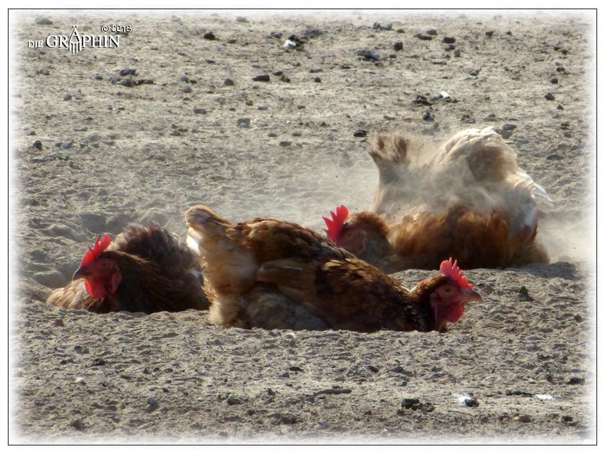 """""""Glückliche Hühner"""" - Biohof Groß-Zimmern © Jennie Bödeker"""