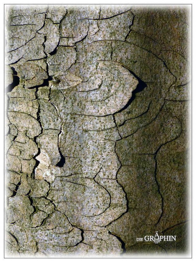 Rindenornament an abgestorbenem Baum - Schlosspark Kranichstein © Jennie Bödeker