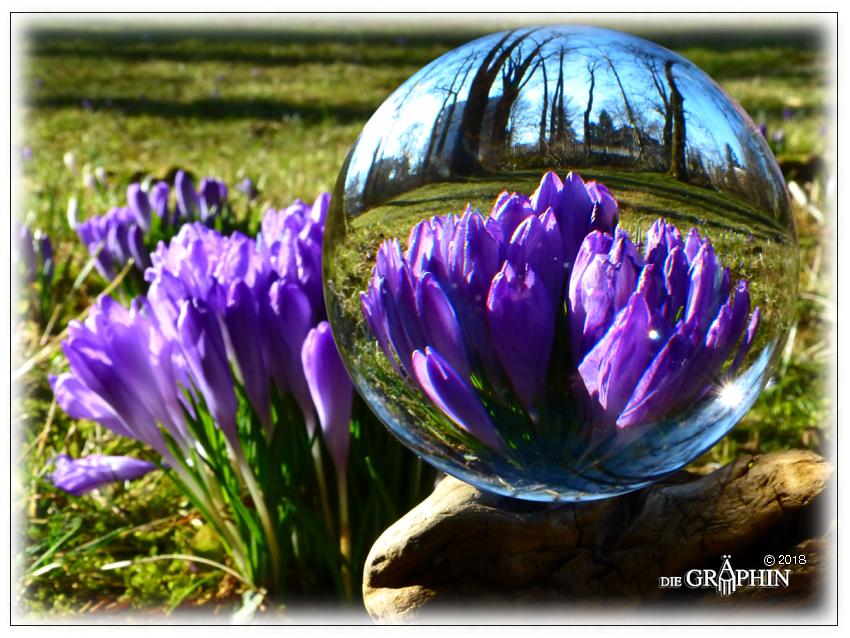 Erste Krokusse - Botanischer Garten © Jennie Bödeker