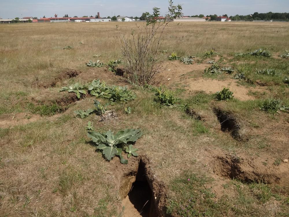 Kaninchenbauten im weichen Boden